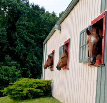 Lighted Barns and Individual Stalls- small